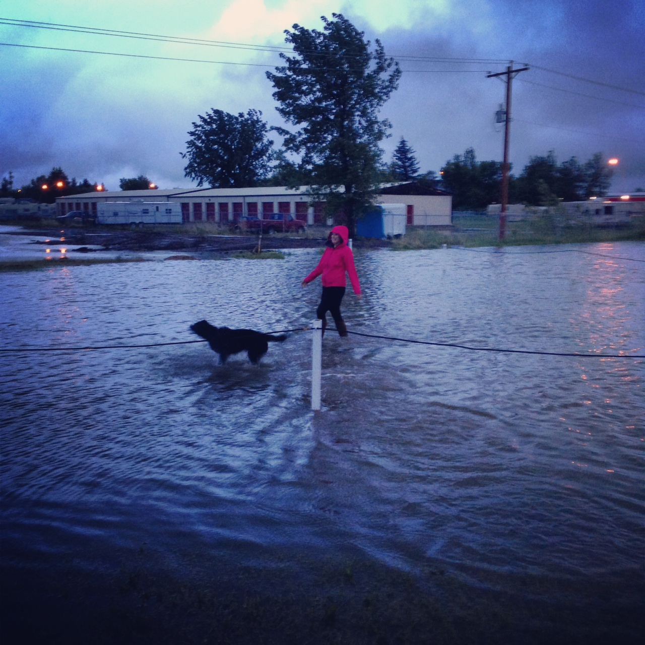 Walking my dog in a flood, no biggie