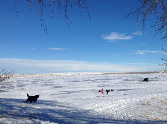 Kids and dogs on the ice
