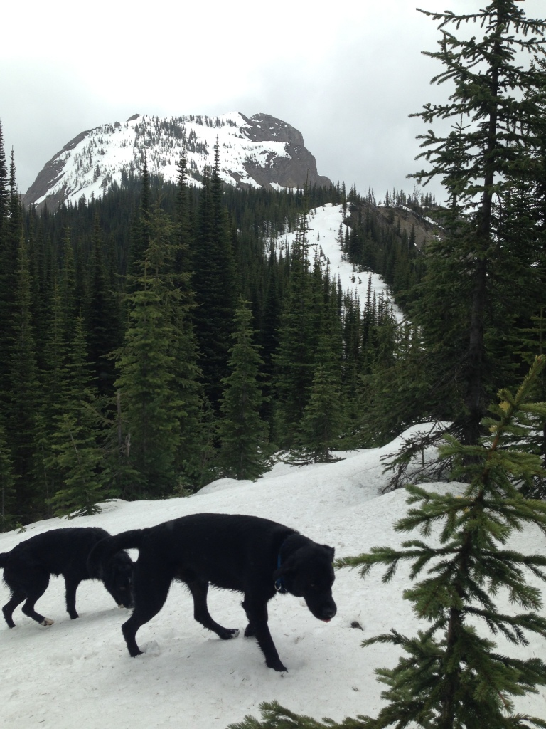 I can see the peak but not the trail. The dogs couldn't find it either.