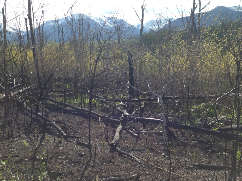 The whole area surrounding the trail was burned